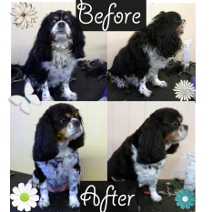Before and After shots of the Beautiful Millie x