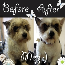 Meg had bath, blow-dry and style :)