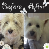 Max WHW before and after